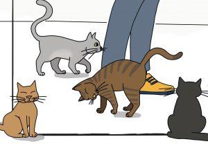 Les animaux des patients
